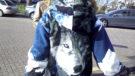 foto hond eigenaar_web