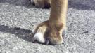 foto honden poot_web